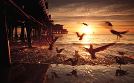 Preview wallpaper Sunset, birds, bridge, United States, California