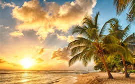 Tropical, paradise, beach, palms, sea, ocean, sunset