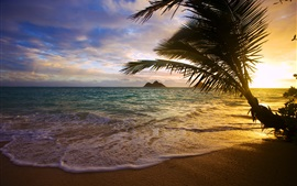 Preview wallpaper Tropical, sea, coast, palm tree, sunset