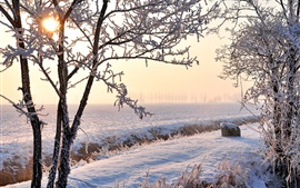 Winter, fields, white snow, trees, frost, sun rays