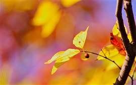 Preview wallpaper Yellow leaves, red berry