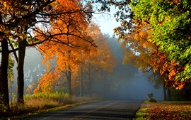Preview wallpaper Autumn, forest, trees, red leaves, road