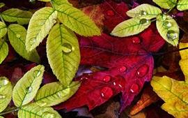 Осень, зеленые желтые листья, капли воды