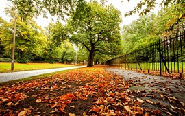 Autumn, park, trees, leaves, road, fence