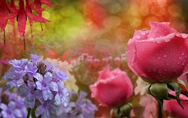 Blue flowers, pink roses, water droplets