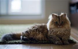 Cat, casa, andar