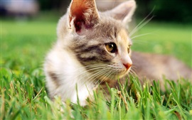 Cat in the grass, face