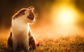 Кошка, солнце, трава, природа пейзаж, лето