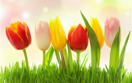 Preview wallpaper Different colors flowers, grass, tulips, pink, yellow, red