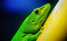 Preview wallpaper Green lizard, yellow branches, bokeh