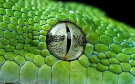 Preview wallpaper Green python eye