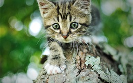 Preview wallpaper Kitten, gray striped, wood, bark, bokeh