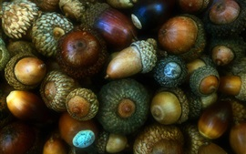 Preview wallpaper Many acorns, fruit