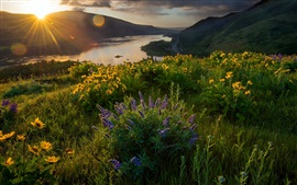 Preview wallpaper Morning light, flowers, river, nature landscape