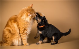 Preview wallpaper Orange cat with black dog