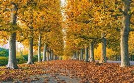 Preview wallpaper Park, road, leaves, trees, grass, autumn