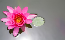 Preview wallpaper Pink flower, lotus, pond, water lily, leaf
