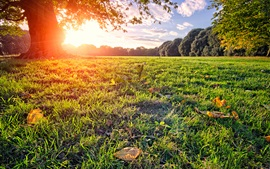 Preview wallpaper Sun rays, park, meadow, tree, summer