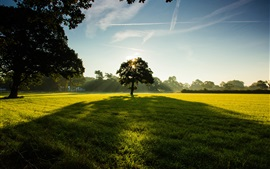 Trees, park, grass, green, sky, clouds, sunlight
