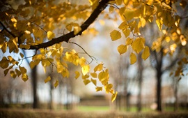 Trees, yellow leaves, autumn, blur, nature