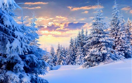 Winter, snow, trees, sky, sunset, nature landscape