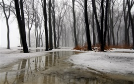 Winter, trees, snow, ice, water, fog, rain