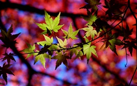 Preview wallpaper Autumn, tree, twigs, leaves, light