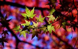 Outono, árvore, galhos, folhas, luz