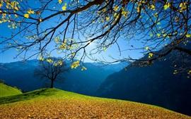 Осень, деревья, листва, горы, голубое небо, солнце