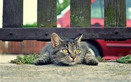 Preview wallpaper Cat under the fence