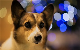 Preview wallpaper Dog, bokeh