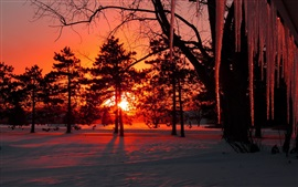 Preview wallpaper Dusk, winter, snow, trees, icicles, sunset