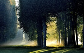 Preview wallpaper Forest, trees, morning, sunlight, fog, autumn