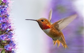 Preview wallpaper Hummingbird flying, wings, flowers