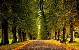 Preview wallpaper Leaves, forest, trees, park, grass, road, autumn
