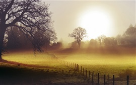 Morning, fields, fence, fog
