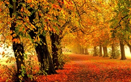 Preview wallpaper Nature autumn, forest, park, trees, leaves, colorful, road