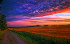 Preview wallpaper Nature landscape, sunset, road, fields, trees