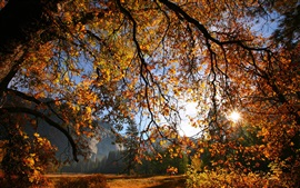 Nature scenery, autumn, tree, branches, leaves, sunlight