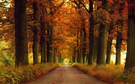Preview wallpaper Road, autumn, trees, grass