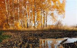 Preview wallpaper Road, birch, autumn, nature scenery
