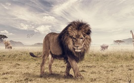 Preview wallpaper Savanna, lion, animals