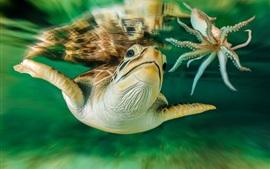Черепаха австралия подводный мир