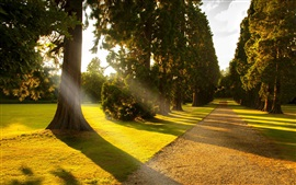 Preview wallpaper Sunlight, park alley, trees, road, grass