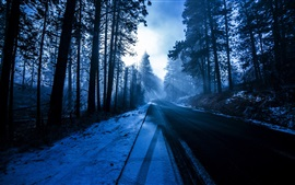 Preview wallpaper Trees, forest, road, snow, winter, sun rays, blue