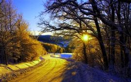 Manhã do inverno, neve, árvores, estrada, nascer do sol