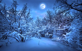 Preview wallpaper Winter snow night, trees, moonlight