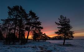 Зимний закат, снег, деревья, сумерки