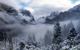 Yosemite National Park, USA, California, trees, mountains, winter, snow, fog