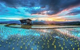 Ásia fazenda, fazenda, arroz, cabana, belas paisagens